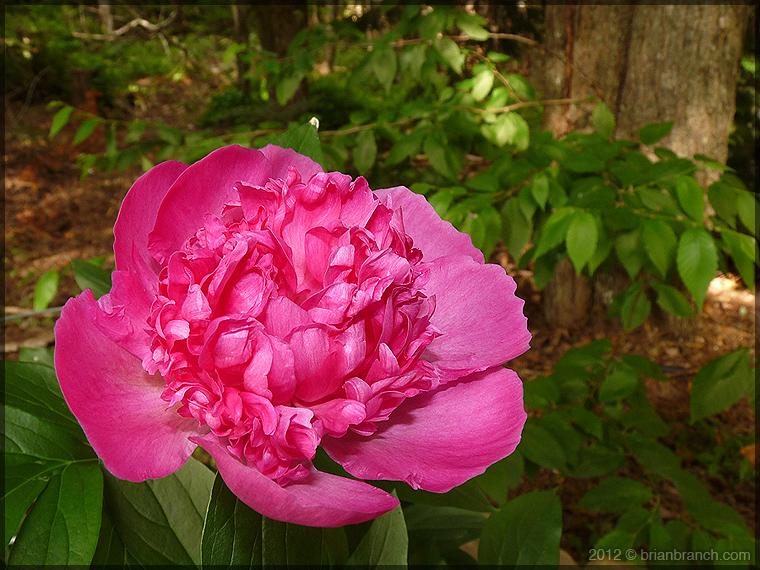 P1260448_flower_760
