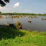 位於宜蘭羅東林業文化園區之貯木池,也是來自湧泉。(圖片來源:邱郁文研究團隊)
