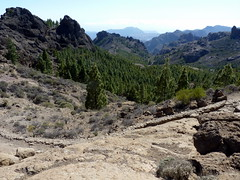 Gran Canaria - Roque Nublo's Surroundings in the Spring