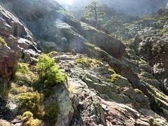 Trace cairnée de Tana di l'Orsu : le chorten de départ de la trace, le couloir qu'on vient de traverser et le ressaut au pin au-dessus des dalles