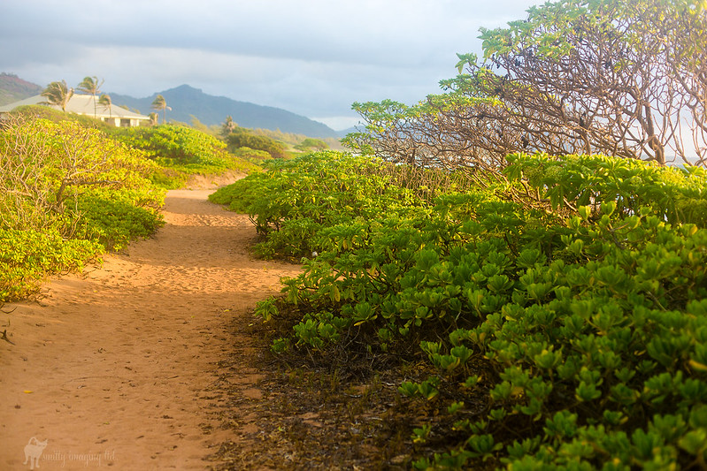 Kauai Beach Resort path