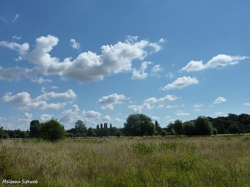 Cumulus dans la prairie
