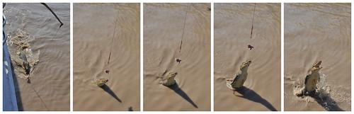 Croc Jump Collage 4