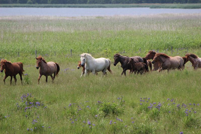 網走国定公園にいる馬