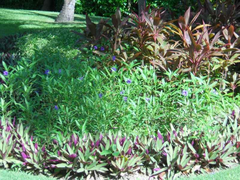 Jardines Bahía Príncipe 7