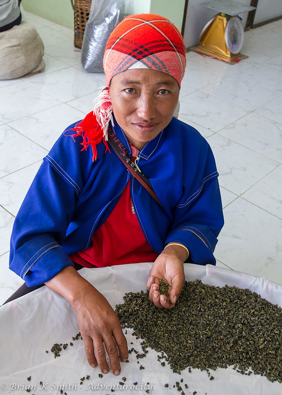 101 Tea Plantation worker grading tea