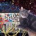 Cat - Synth - Space