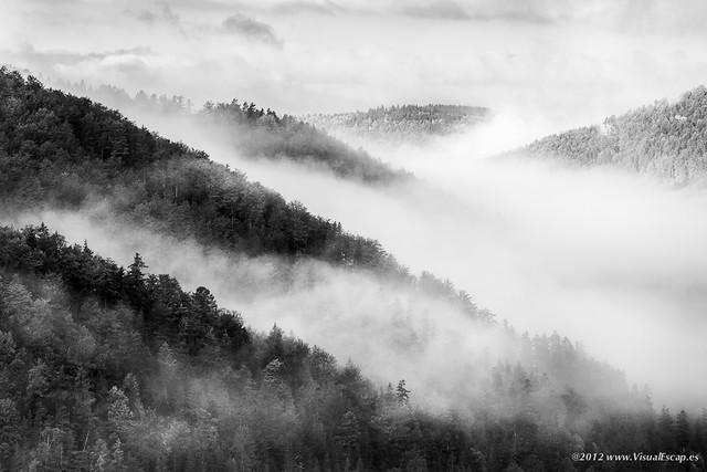 One Foggy Morning ~ Slovakia