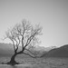 [somewhere in New Zealand] that Wanaka tree by pooldodo