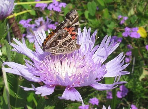 04-28-12 Butterfly Garden by roswellsgirl