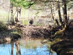 Beaver Dam, Readfield 3