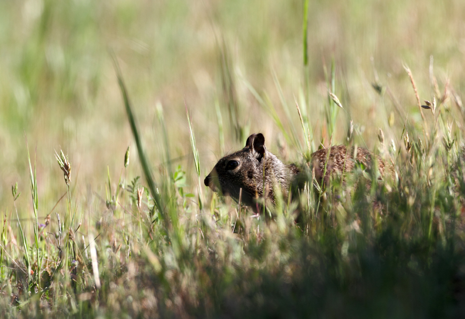042112_01_groundSquirrel