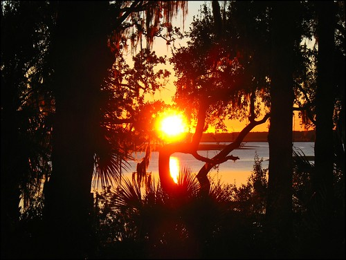 trees usa sun silhouette sunrise river earlymorning southcarolina risingsun philscamera lowcountry bluffton palmettobluff mayriver goldensunlight philandlucysotherplace