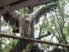 コンドル in 上野動物園