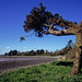 Strangford Lough Tree 1