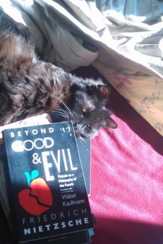 Cat vs. Nietzsche