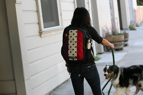 Timbuk2 Custom Knockout Backpack Dog Walking