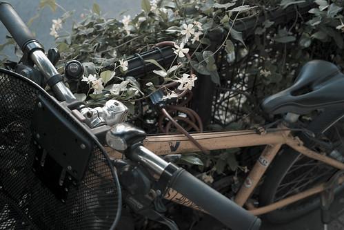 flower and bike