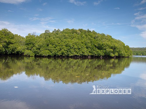 Bongsalay Mangrove Natural Park (10 of 12)