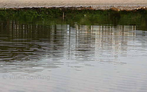 Tidal Pool Reflection