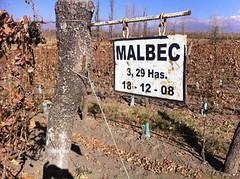 Los vinos y la diversificación de varietales