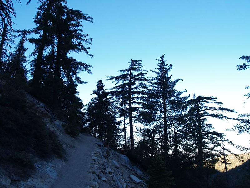Devil's Slide Trail at dawn - tree silhouettes