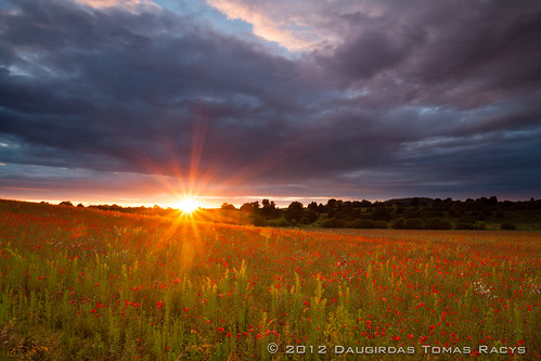 Last rays of Sun illuminating the last poppies of 2012