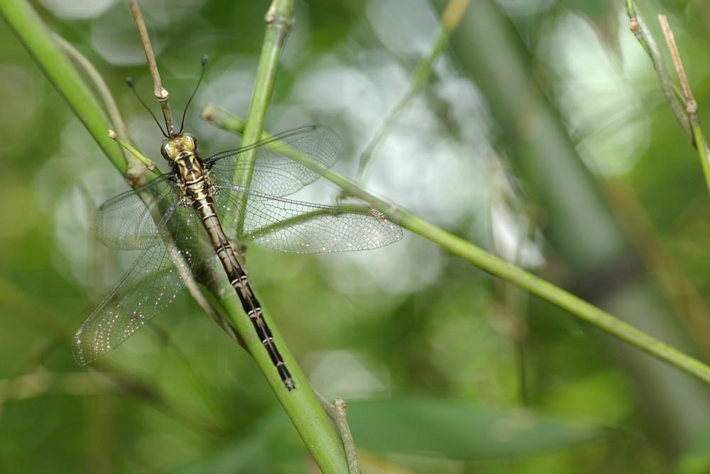 我不是蜻蜓