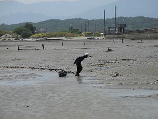香山溼地養蚵業受科學園區污水排放影響逐漸沒落,留下老蚵農寂寞背影。