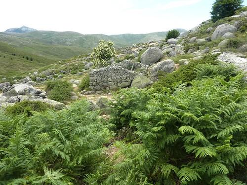 Bergeries de Frauletu : les ruines des anciennes bergeries
