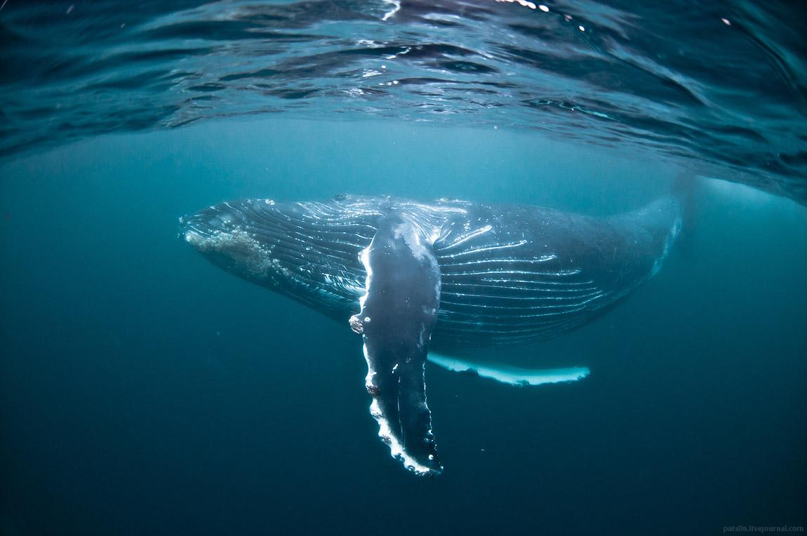 sardine run 2012 #1