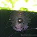 spider web in the sun