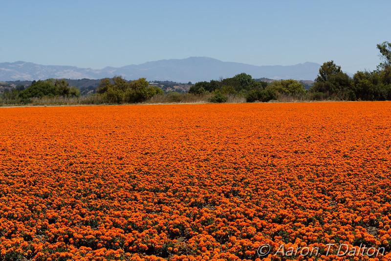 A Vibrant Field