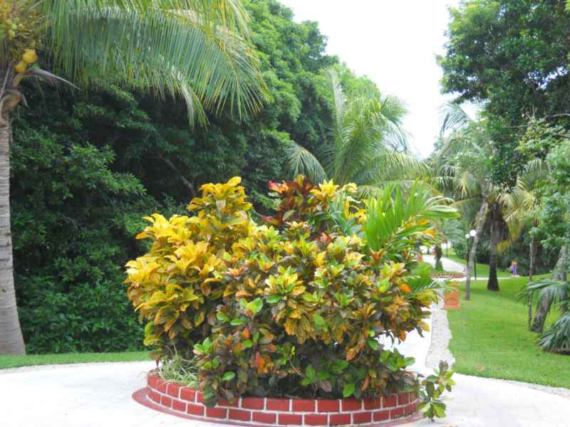 Jardines bahia principe 9