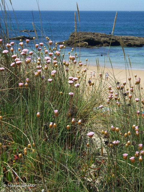 Primavera Marinha, 2014, Fujifilm FinePix A510