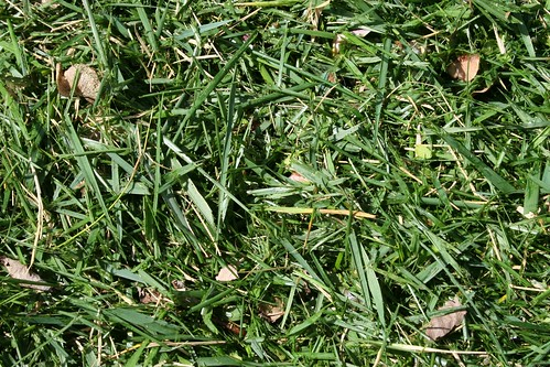 Its Compostable : Grass Clippings