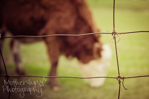 Cow-keh