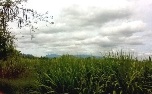 week 17, 2012: View from Malaybalay City to Valencia City