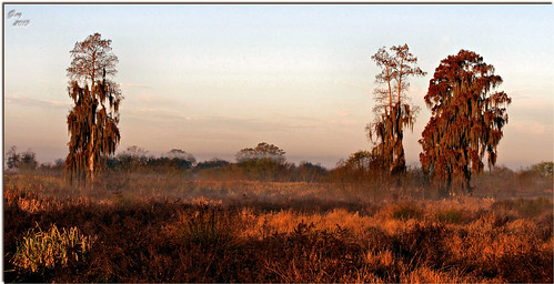 morning fog sunrise