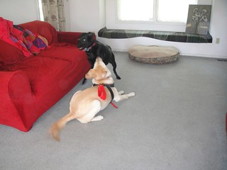 Jet and Lexi Playing