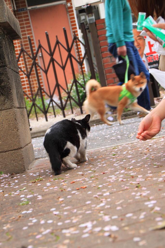ガチャピン犬と猫