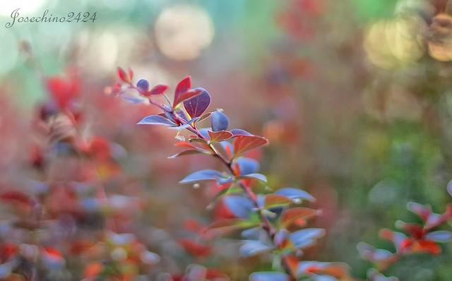 Luces y color
