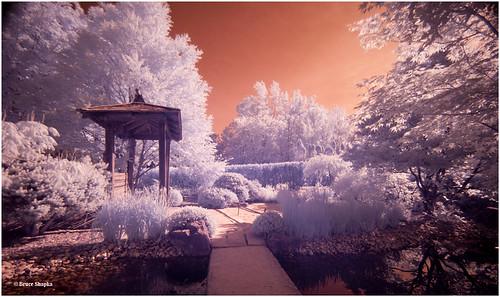 Japanese Garden by Bruce Shapka