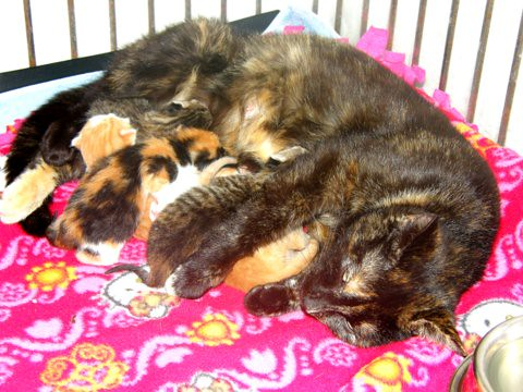 Shaling and her babies