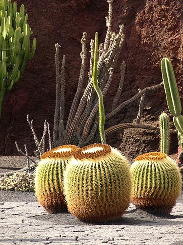 Cactus Garden, Teguise, Lanzarote