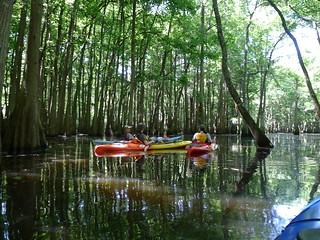 Sparkleberry Swamp Jun 2, 2012 12-04 PM