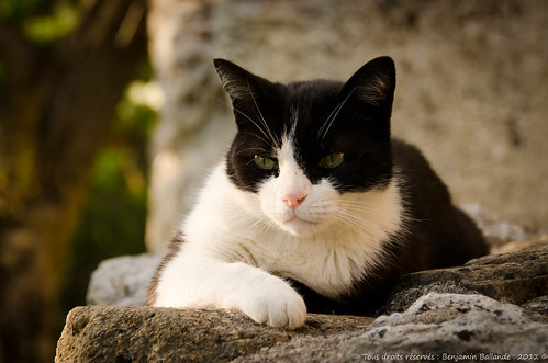 My cat : Nikon D7000 : Nikkor 28 300 AFS