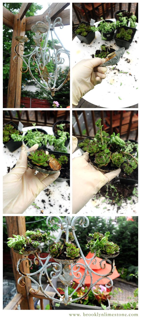 SucculentChandelier