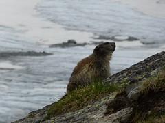 animal(1.0), marine mammal(1.0), sea(1.0), mustelidae(1.0), fauna(1.0), sea otter(1.0), harbor seal(1.0), marmot(1.0), mink(1.0), wildlife(1.0),