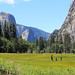 A meadow in Yosemite Valley